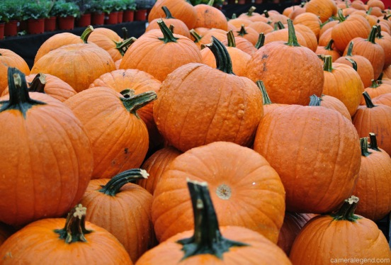 DSC_0152Pumpkins