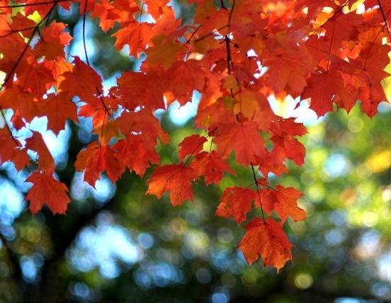AutumnD700NC