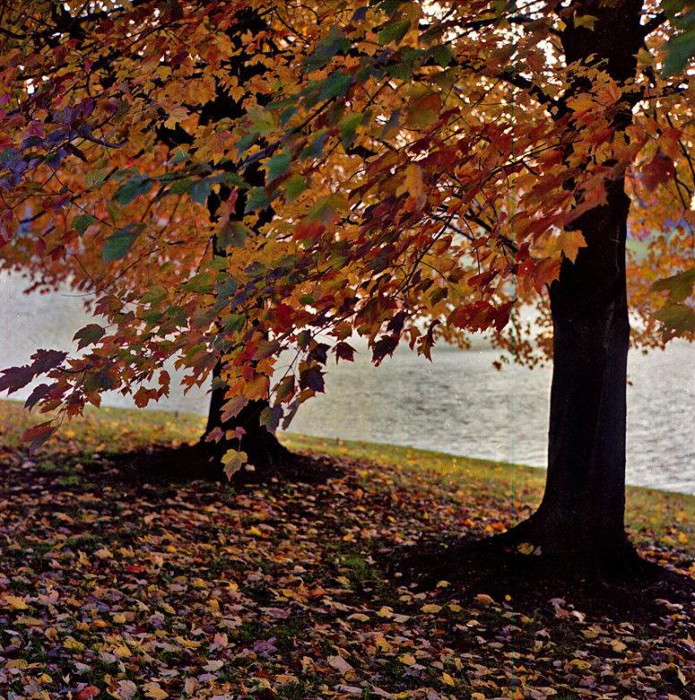 AutumnRollei